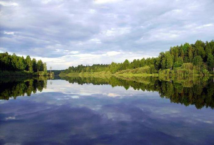 We study the rivers of the Leningrad region: Narva, Luga, Dolgaya, Svir, Okhta